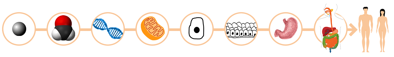 http://fad.lacitec.on.ca/public/bobio/static/images/org_ensemble.png